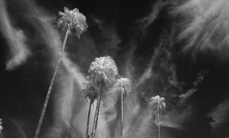 Near Infrared Palm Tree by Robert Crouse-Baker. License CC BY 2.0
